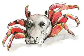 Hybride N°009 : Hippopotame-Crabe