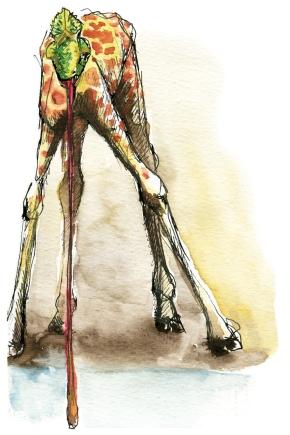 Hybride N°004 :Girafe-Caméléon