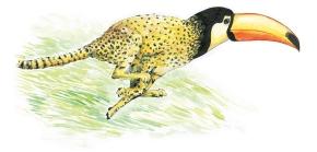 Hybride N°022 :Toucan-Guépard